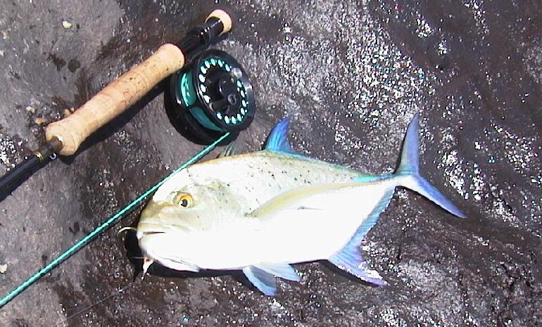 Fly fishing hawaii big island for Fly fishing maui